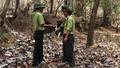 Đắk Lắk: 10 tháng xảy ra hơn 800 vụ phá rừng