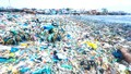 Sự đớn đau của những chú rùa biển và lời kêu gọi của Thủ tướng Nguyễn Xuân Phúc