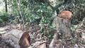 Nghệ An: Khởi tố hình sự 14 vụ, kỷ luật gần 50 cán bộ liên quan đến phá rừng