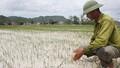 Nghệ An: Nắng hạn ảnh hưởng đến gần 11.000ha diện tích sản xuất nông nghiệp