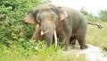 Một người đàn ông bị voi rừng quật chết