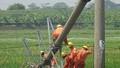 Sửa đường điện sau bão một người đàn ông tử vong