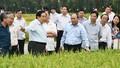 Hội nghị Chính phủ về phát triển bền vững ĐBSCL