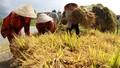 Cứu đói khẩn cho hơn 9.000 người dân Gia Lai