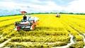 Đồng Tháp: Xây dựng dự án cánh đồng sản xuất lúa  tiết kiệm nước