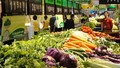Săn rau hữu cơ: Phải đặt tiền trước mà giá vẫn cao