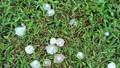 Mưa đá bất thường ở Yên Bái