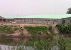Phát hiện nhiều xác lợn chết ở Bắc Ninh