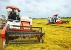 Xuất khẩu nông nghiệp đạt gần 160 tỷ USD sau 5 năm tái cơ cấu