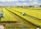Dự án nông nghiệp, nông thôn được ưu tiên khuyến khích đầu tư