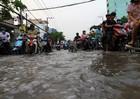 Dân ngã sấp mặt vì triều cường, BV Nhi Đồng quá tải, HĐND TP vẫn quyết xây nhà hát giao hưởng