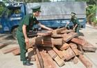 Quyết liệt đấu tranh chống buôn lậu gỗ ở Tây Nguyên