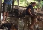 Kinh hoàng cảnh tượng nhồi tạp chất vào chó trước khi bán