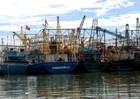 Hàng loạt tàu cá vỏ thép hư hỏng ở Bình Định: Tỉnh sẽ hỗ trợ nếu người dân kiện doanh nghiệp