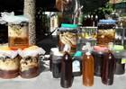 Kỹ nghệ đi rừng 'săn ong'