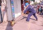 Hà Nội: Đề xuất thành lập đội chuyên trách bắt chó thả rông