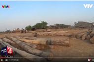 """""""Luật rừng"""" và hành trình của những khối gỗ lậu"""