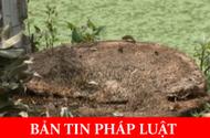 Hành vi đốn hạ cây xanh ở Hà Nội có dấu hiệu vi phạm luật hình sự?