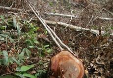 Khởi tố 4 đối tượng trong vụ phá rừng ở huyện Đạ Tẻh