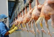 Tiếp tục 'mở đường' cho thịt gà chế biến xuất sang EU