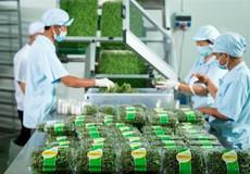 Nông nghiệp nông thôn: Miễn giảm 20.000 tỷ đồng/năm để có 30.000 doanh nghiệp
