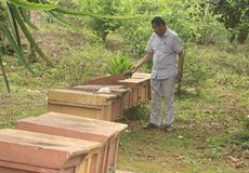 Triệu phú mật ong U80