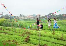 Du lịch sinh thái gắn với nông nghiệp: Đánh thức thị trường ngàn tỷ