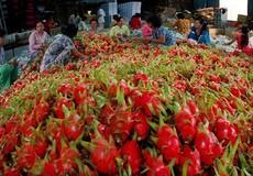 Xuất khẩu nông sản sẽ vượt 40 tỷ USD trong năm nay