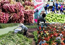 """Tình trạng """"khủng hoảng thừa"""" nông sản: Nên luật hóa trách nhiệm trong dự báo thị trường"""