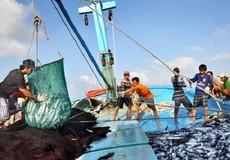 """""""Gỡ"""" thẻ vàng là nhiệm vụ trọng tâm của ngành thủy sản"""