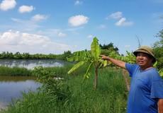 """Thái Bình: Tiền tỉ hỗ trợ nông dân gặp thiên tai bị """"ngâm tôm"""""""