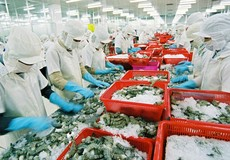 Tôm Việt Nam quay lại thị trường Hoa Kỳ