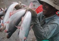Xuất khẩu cá tra: Mục tiêu 2 tỷ USD hoàn toàn trong khả năng