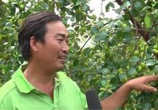 Thầy giáo bỏ nghề đi trồng táo
