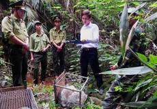 Cải tổ kiểm lâm rừng đặc dụng để dễ… mất rừng?