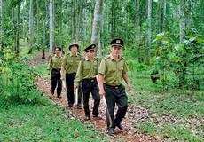 Không có chuyện rút kiểm lâm ra khỏi rừng đặc dụng, rừng phòng hộ