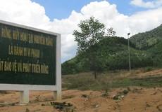 Thủ tướng yêu cầu điều tra vụ phá rừng tại Bình Định
