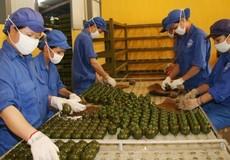 Công nghiệp quốc phòng Việt Nam được định hướng phát triển thế nào?