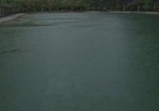 Vợ chồng trẻ cứu 2 cháu bé ngã xuống hồ, 4 người đều thiệt mạng