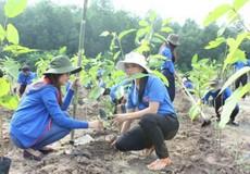 """""""Quỹ 1 triệu cây xanh cho Việt Nam"""" sẽ trồng 100.000 cây  tại Bắc Kạn"""