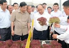 Thủ tướng: 'Trước khi gieo hạt giống cần nghĩ tới thị trường tiêu thụ ở đâu'