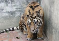 """Xử lý tội phạm về động vật hoang dã: Cơ quan tố tụng cần thực hiện chính sách """"3 không"""""""