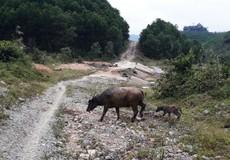 Thừa Thiên - Huế: Tuyến đường trăm tỷ thi công trì trệ