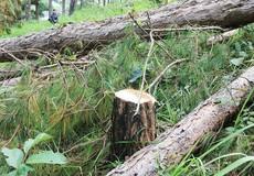 Vi phạm Luật Bảo vệ và Phát triển rừng ở Lâm Đồng vẫn diễn biến phức tạp