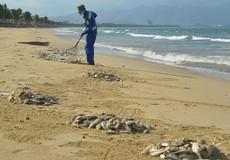 Cá chết ở biển do dùng thuốc nổ đánh bắt