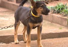 Cấm đối xử vô nhân đạo với vật nuôi