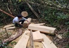 Gia Lai: Một đối tượng khai thác gỗ lậu ra đầu thú
