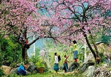 Những ngôi làng có 4 mùa xuân ở miền Tây