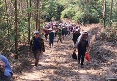Quảng Trị: Thương vụ khai thác rừng giá rẻ bị người trồng rừng phản đối