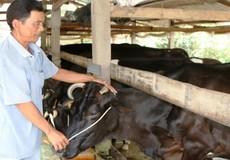 Vì sao hợp tác xã nông nghiệp chưa phát triển như kỳ vọng?